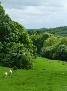 Cotswold field
