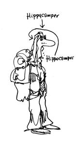 hazelhippycamper
