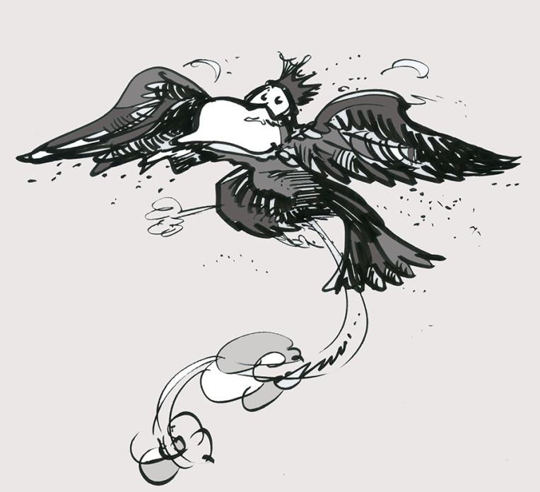 parrotsf