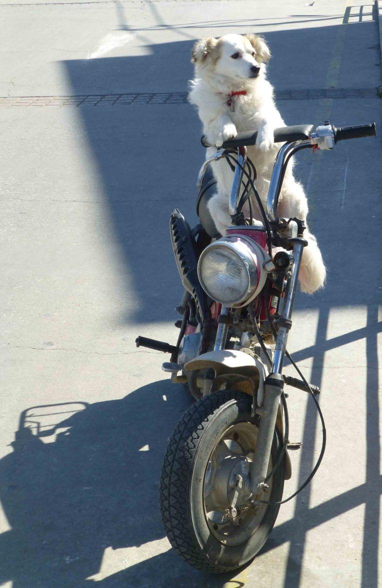 Rosdogbike