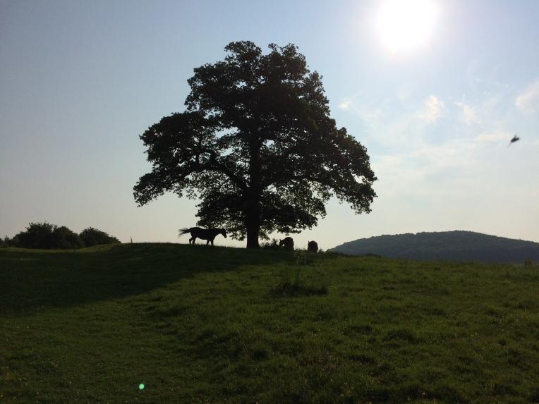 Paradise tree