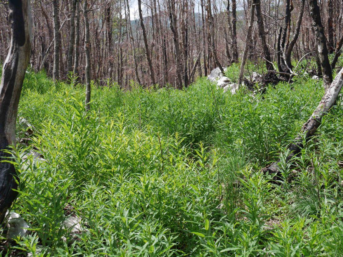 Regenerating woods