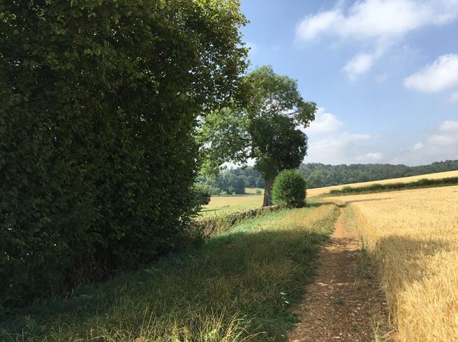 Cotswoldcorntreessf